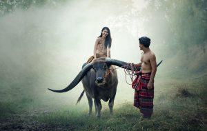 Ride buffalo in Cambodia